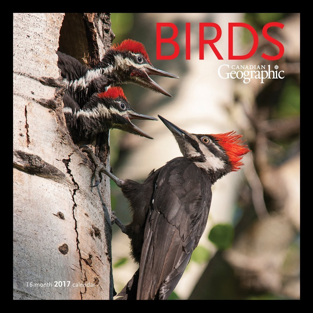 Canadian Geographic Birds Wall Calendar