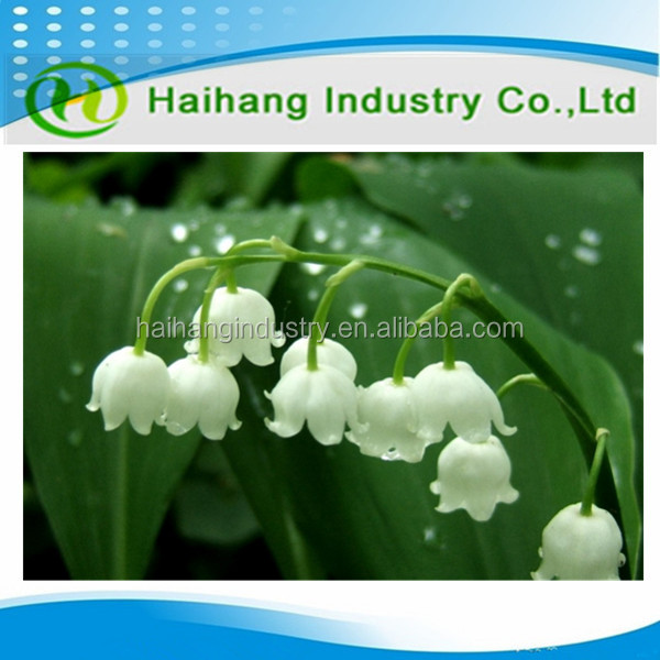 High Purity 99.7% CAS No 63500-71-0 Factory Supply