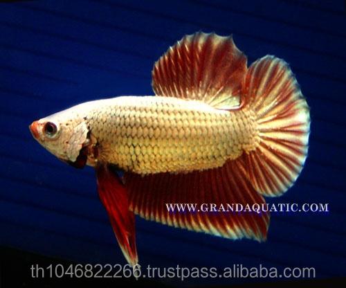 Granja para la venta y exportador de peces de acuario de for Granja de peces
