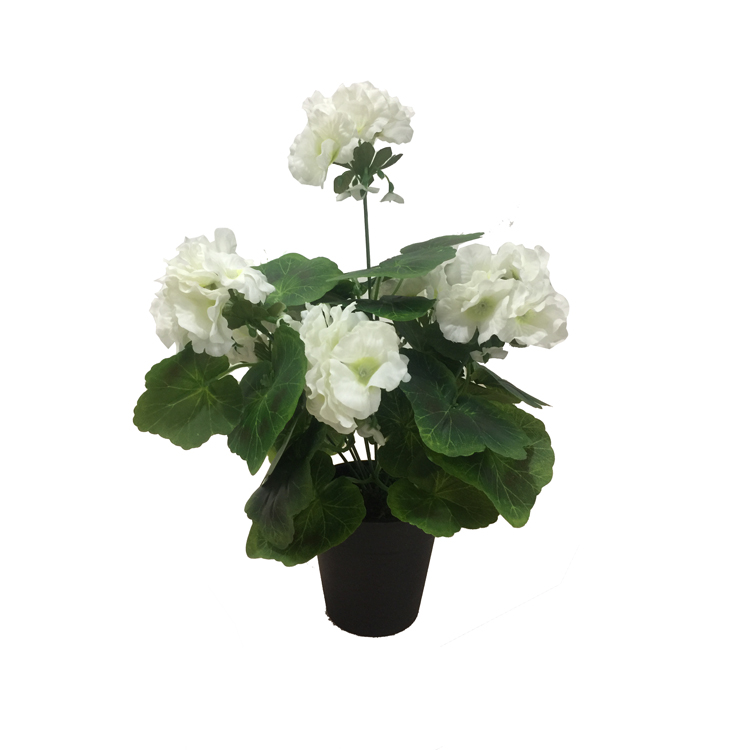 White Begonia Landscaping Decking White Carnation Flower 20-40 Cm ...