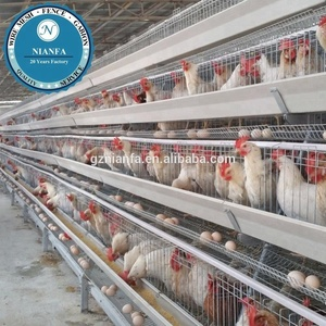 Guangzhou wholesale quality steel chicken cage/layer chicken coop design for Uganda farms(Guangzhou Factory)