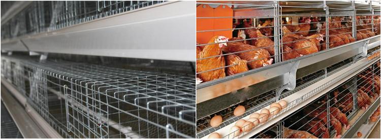 Chicken Hen cage.jpg
