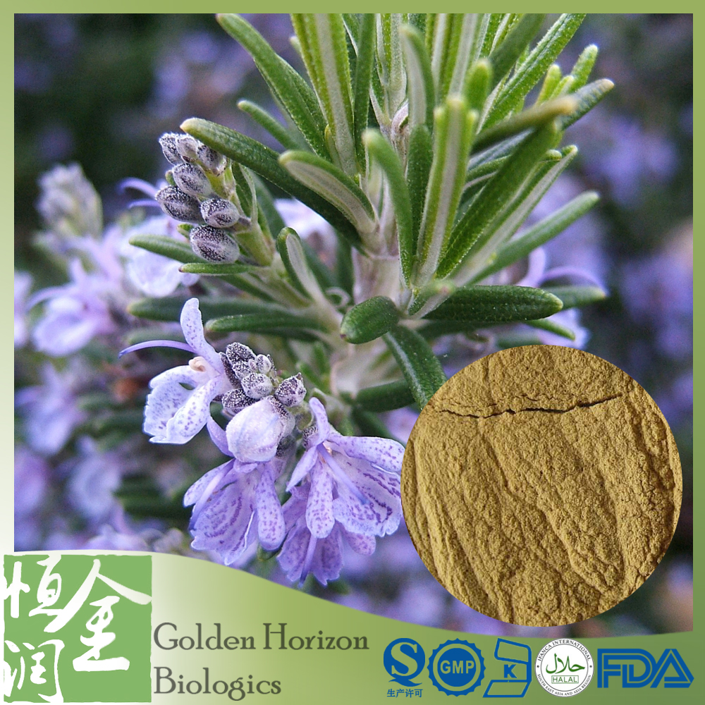 Rosemary Extract Pe Or Oil Extract High Quality