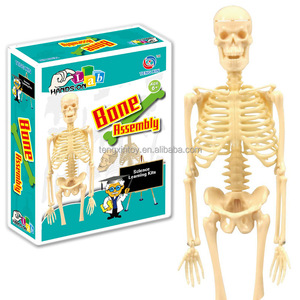Human body model science kits toy for kids