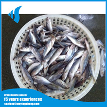 Whole round horse mackerel jack mackerel fish for Canned ingredient