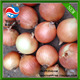 Gansu onion red onion fresh yellow onion