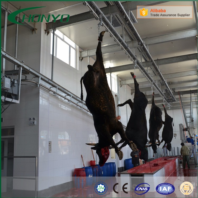 Customized Cattle and sheep slaughter house equipment with cold room