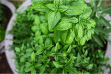 Hiv cure natural herbs