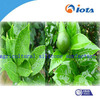 High purity chemical surfactant IOTA2000 with good development of resistance