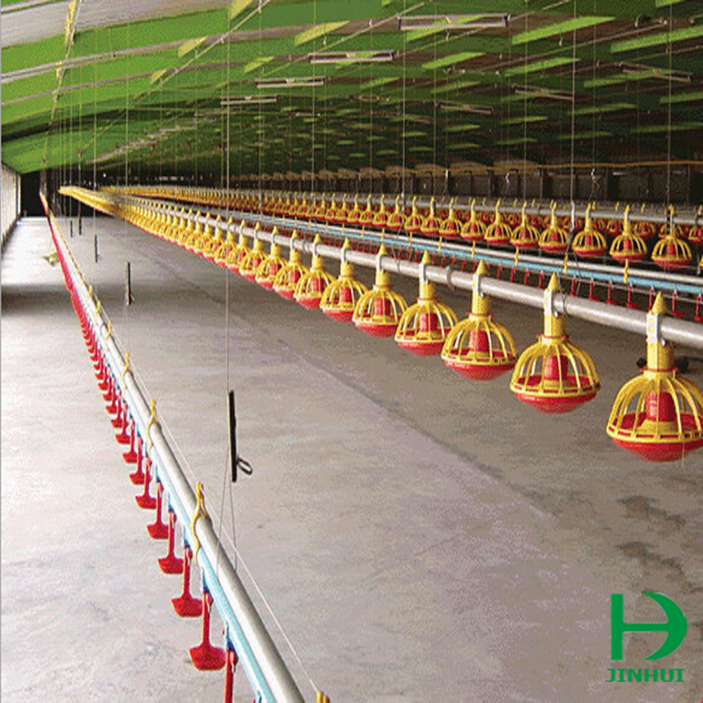 automatic feeding and drinking line chicken egg poultry farm equipment
