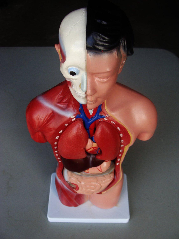 Cheap Parts Female Anatomy, find Parts Female Anatomy deals on line ...