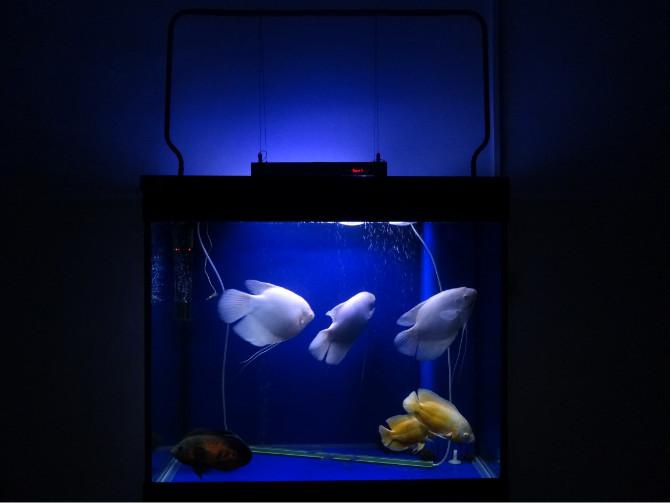 Chinese Led Aquarium Light 165watt Led Reef Light Coral Reef Used ...