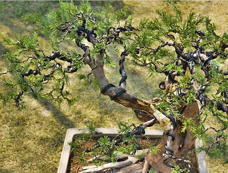 Высококачественные экологически чистые инструменты для садоводства, анодированная алюминиевая проволока с возможностью настройки