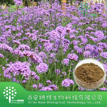 100% Natural Verbena officinalis extract powder factory