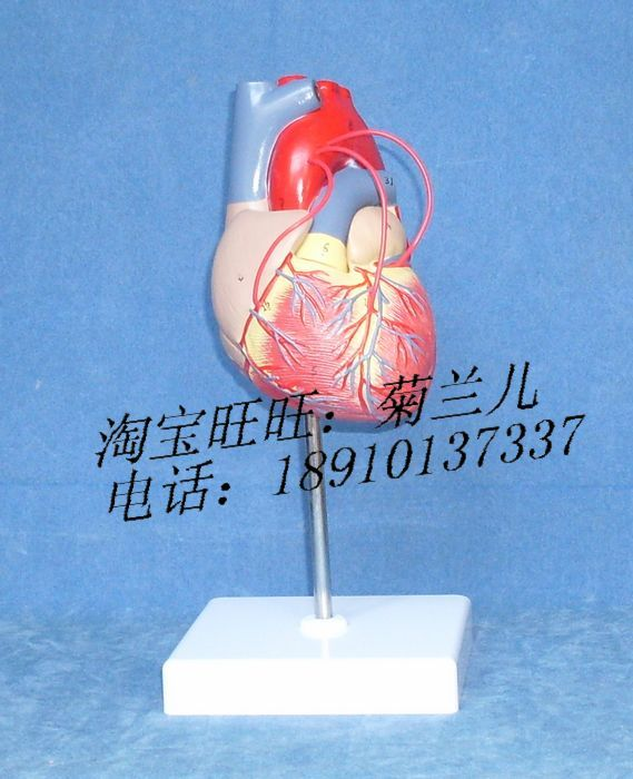 Online Buy Wholesale bypass surgery from China bypass