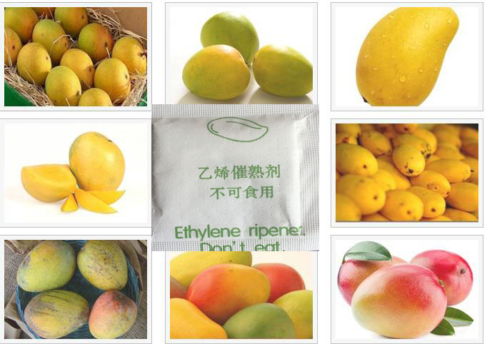 China mango karachi wholesale 🇨🇳 - Alibaba