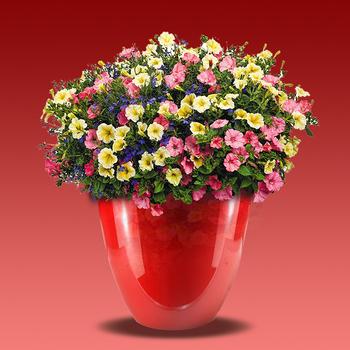 Colorful Square Indoor Outdoor Plants Decorative Garden Plastic Flower Pot