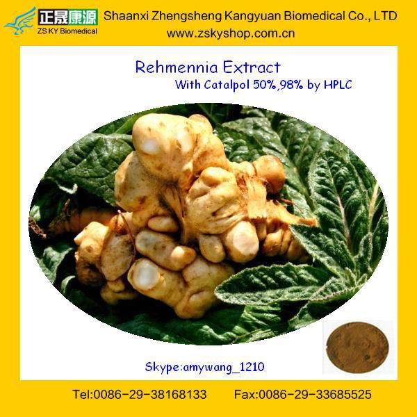 Dried Rehmanniae Root Extract with 98% Catalpol for Antidiabetic Effects