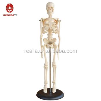 Mini Skeleton Model Buy Mini Skeleton Modelmini Plastic Skeletons