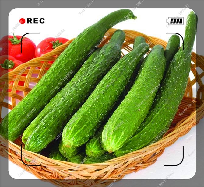 30pcs/bag Cucumber Masha Russian Vegetable Seeds,bonsai seeds for sale home garden