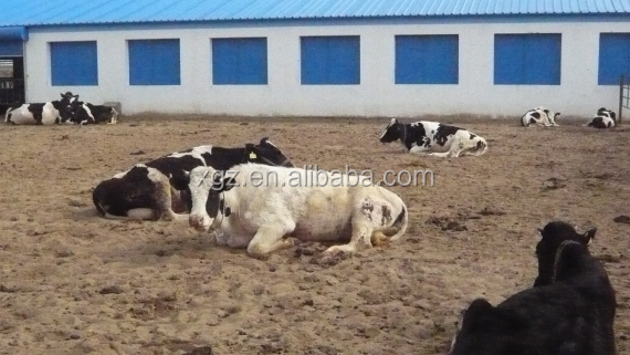 low cost advanced design dairy plant for cattle feeding panels