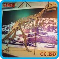 dinosaur fossil and skeleton replicas for theme park