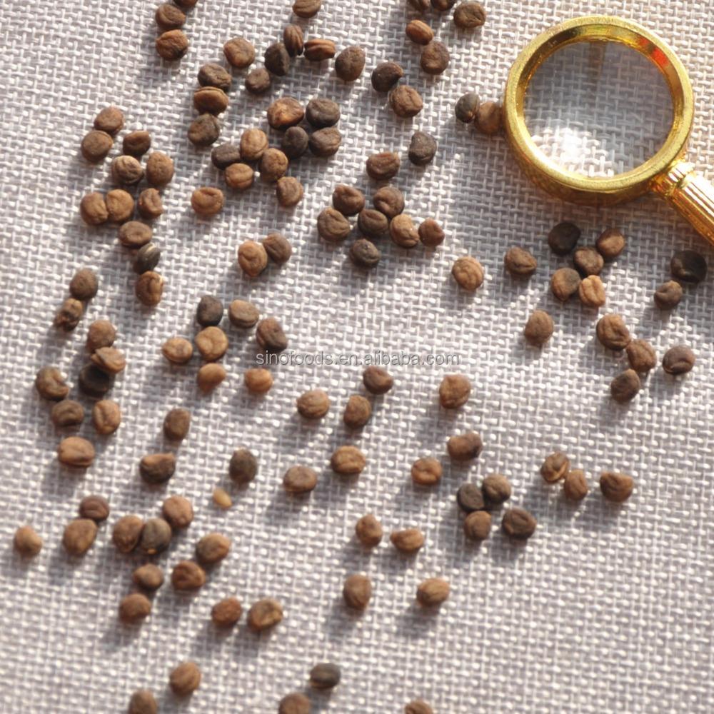 семена женьшеня