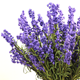 Rubber Material Lavender Artificial flower Room Decoration Preserved Flower