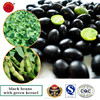 Black beans for sale black bean with green kernel