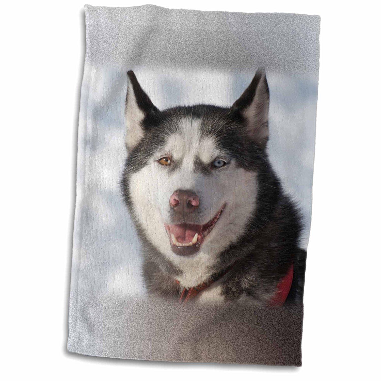 3dRose Danita Delimont - Dog - Sled dog, British Columbia. - 12x18 Towel (twl_248356_1)