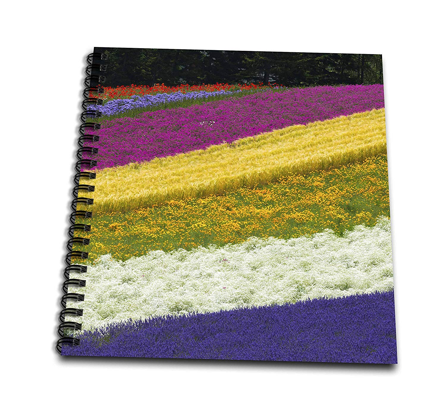 3dRose Danita Delimont - Agriculture - Farm with rows of colorful flowers, Furano, Hokkaido, Japan - Memory Book 12 x 12 inch (db_276889_2)