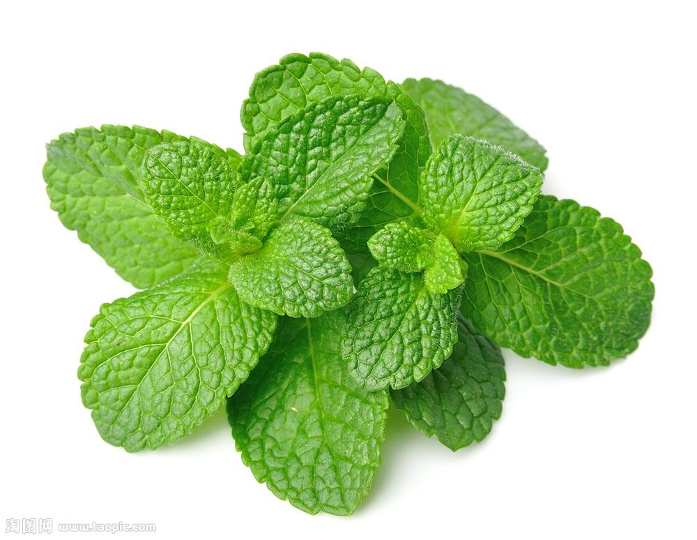 Mint flavour essence for Rba/Rda/Sub-Ohm Mod or Vapor juice