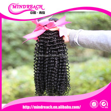 Qingdao Mindreach Hair products wholesale curly human hair top grade Mongolian kinky curly hair