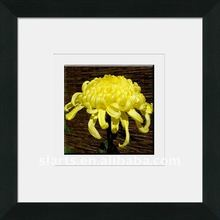 yellow chrysanthemums crystal framed painting