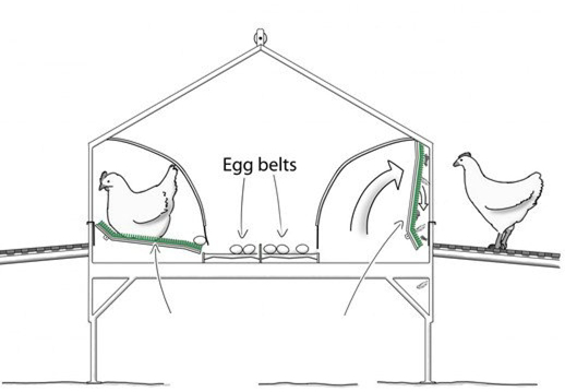 Automatic nest system equipment chicken Manual egg collection box