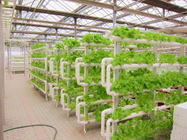 Vertical Hydroponic Garden Home Design Inspiration