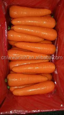 2017 New Crop Carrot of FujianProvince