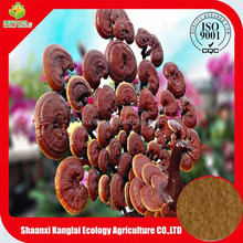 Wild Growing Red Reishi Mushroom Extract Powder/High Quality Reishi Mushroom