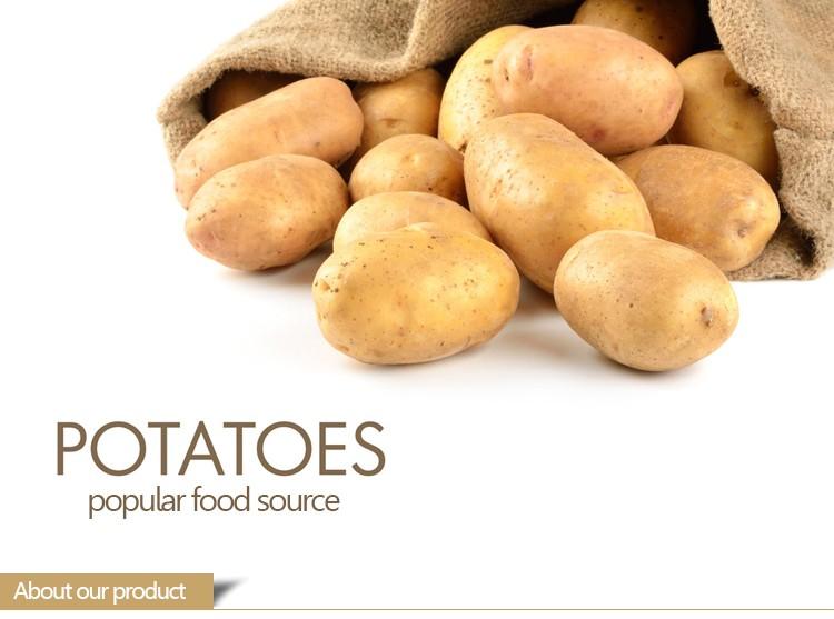 Wholesale bulk holland potato seeds