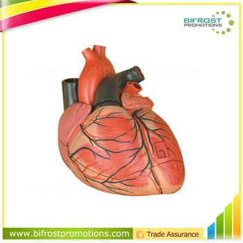 Vivid Human Organs Body Anatomy Heart Model - Buy Heart Model,Human ...