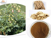 Guarantee quality dried astragalus root powder made in Chinese herbals