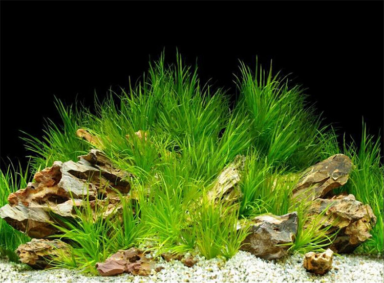Aquarium Fish Tank Backdrop And Background Paper Reptile Vivarium ...