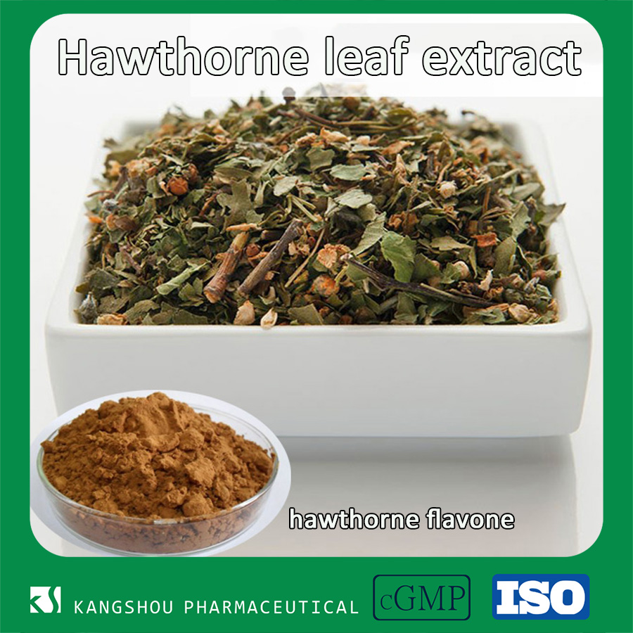 Health care product Natural chinese Hawthorn Leaf Extract Powder with Flavone