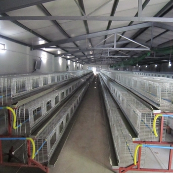 Broiler Poultry Farm Shed Design Layer Egg Chicken Cage