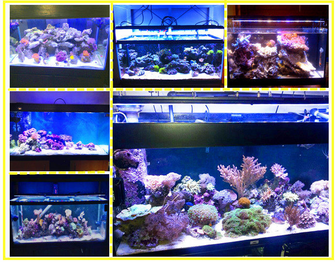 60w Coral Reef Tank Led Aquarium Light Diy Crystal Panel 24 Inch ...