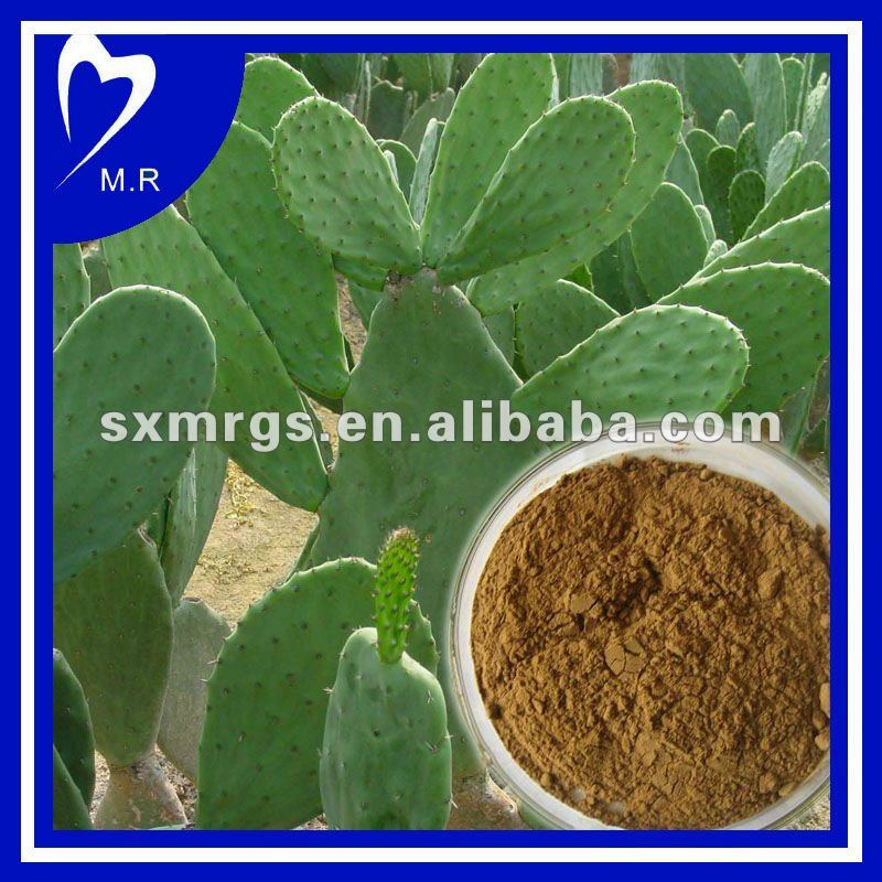Natural Hoodia Extract For Lose Weight