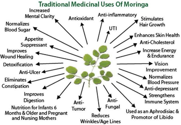 Moringa Capsule Leaf Powder/bulk Moringa Powder/moringa Leaf ...