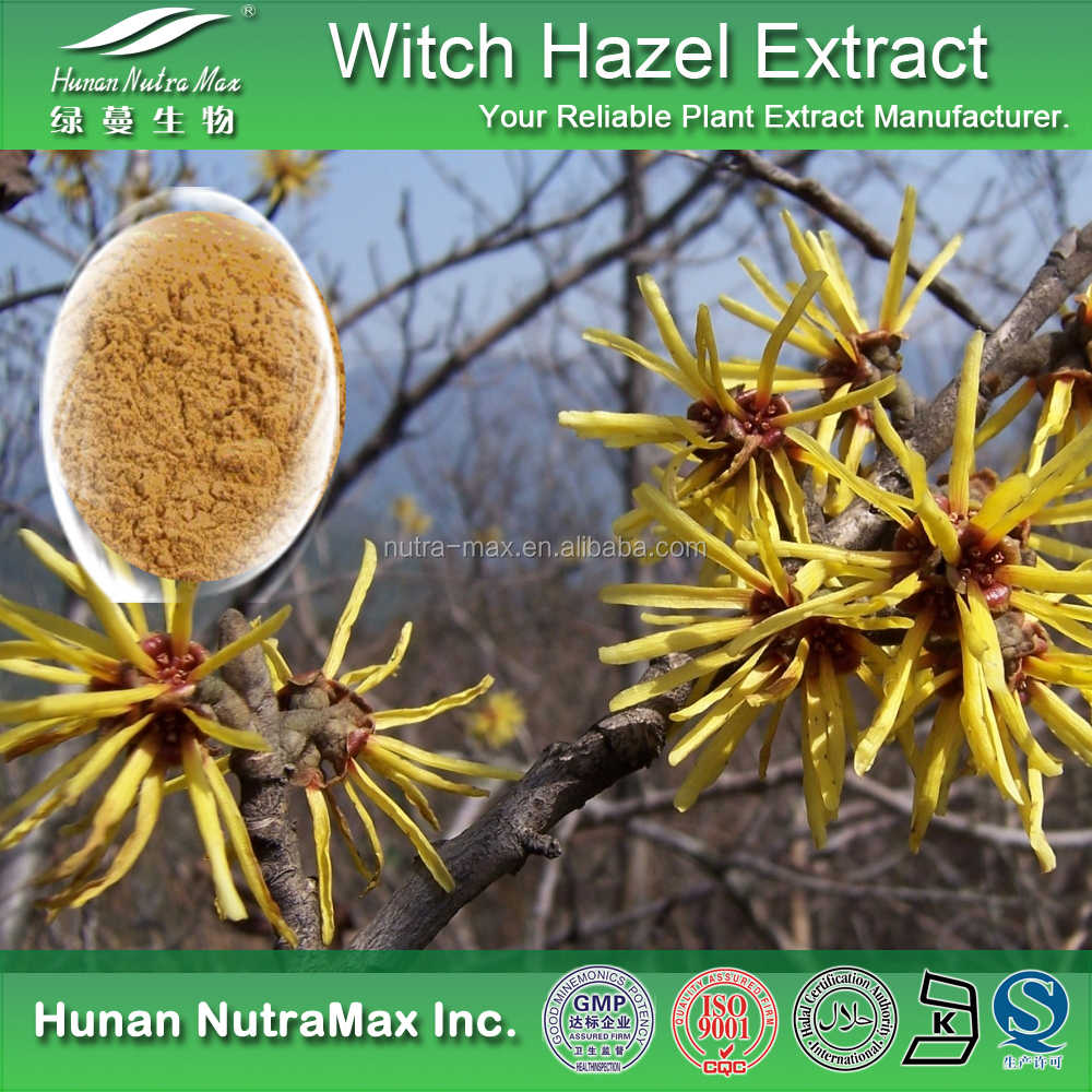 100% Pure Hamamelis mollis Powder, Witch Hazel Powder