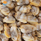 High quality Frozen Clams in shell fish with Multiple sizes