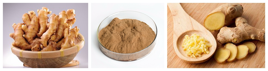 Top Quality Organic Red/Black Ginger Root Extract
